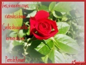 dans Coup de coeur 1.citations-sur-les-roses-300x227