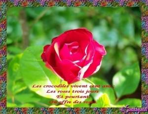 dans Coup de coeur 3.citations-sur-les-roses-300x231