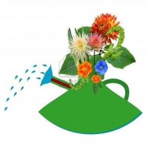 Les effets négatifs des médicaments, quels sont-ils? dans General 7246787-arrosage-des-jardins-et-des-fleurs-vivantes-objet-blanc-isolees-arriere-plan-300x289