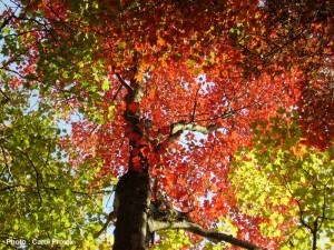 L'automne , magnfique poésie de Catherine PAYSAN dans AUTOMNE 2p144k25-300x225